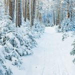 The winter woods